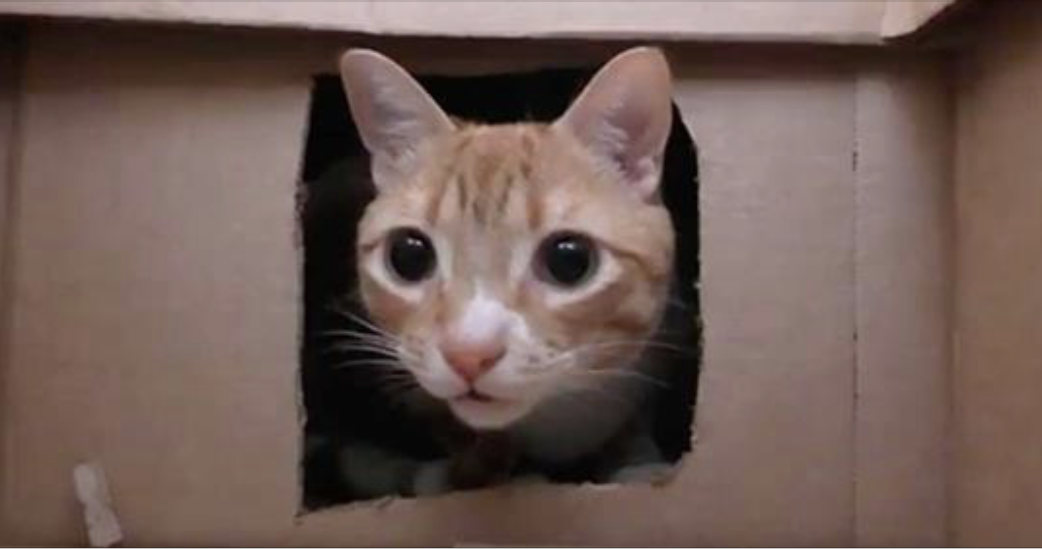 Image result for OVER 1300 CATS RESCUED AFTER PEOPLE SAW TRAPPED CATS IN METAL CAGES WAITING TO BE SOLD FOR MEAT, HORRIFYING! image