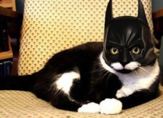 Cats in Halloween costumes could be the funniest thing youu0027ll see. & Cats in Halloween costumes could be the funniest thing youu0027ll see ...