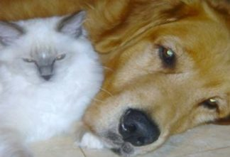 Dogs   The Meow Post Daily Cat Blog